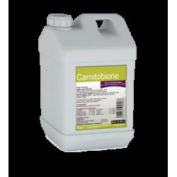 Carnitobione   Bidon de 500 ml